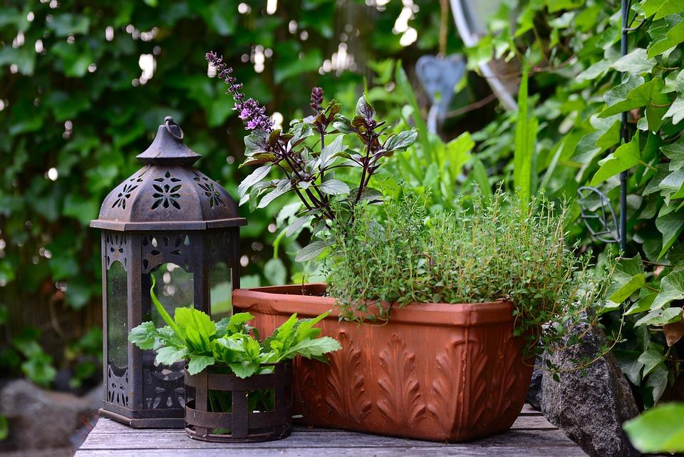 bylinky v truhlíku