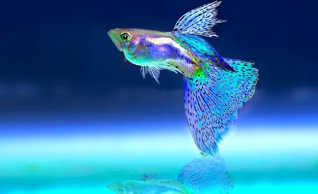 okrasná rybička v akváriu