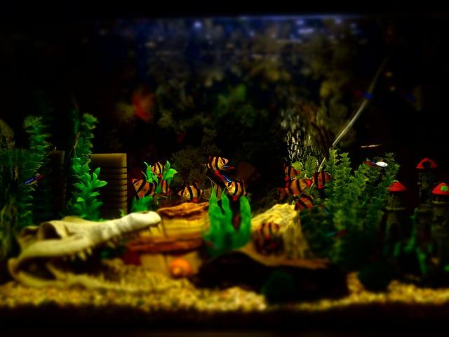 akvárium s rybičkami
